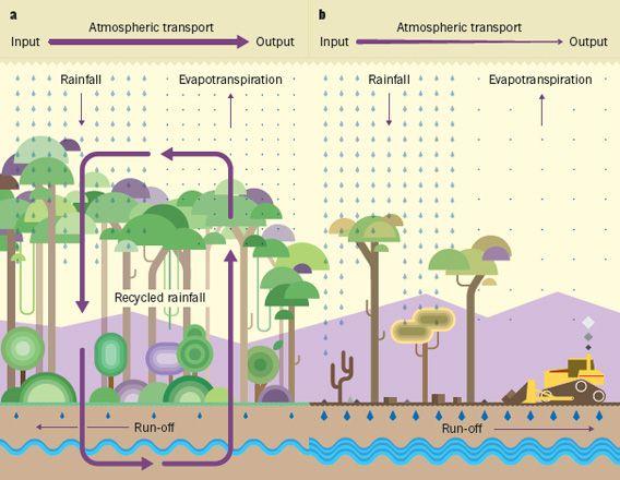 Amazonas  deforestaci  n y precipitaciones menores   duendevisual