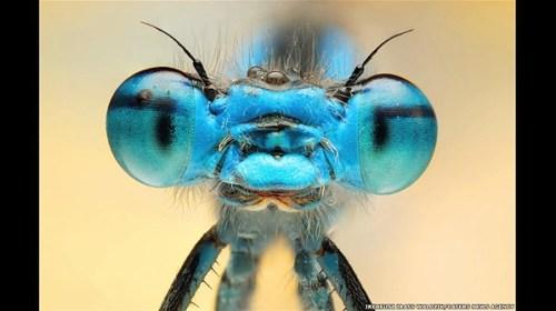 Macrofotografía: Ireneusz Irass Walędzik  el fotógrafo polaco nos muestra imagenes de insectos