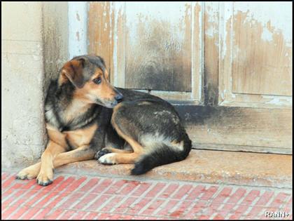 Hasta 46% de los criminales, con historial de maltrato animal