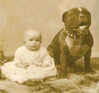 Durante 150 años, los Pitbulls fueron criados para ser niñeras