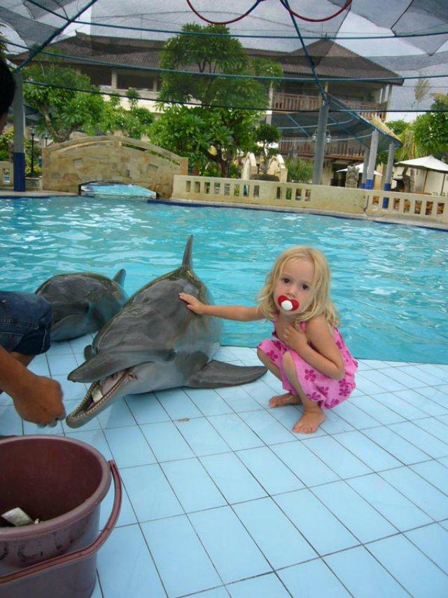Delfines atrapados en ba eras para disfrute de turistas for Piscinas pequenas plastico duro