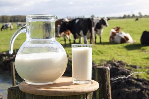 de-donde-viene-la-leche