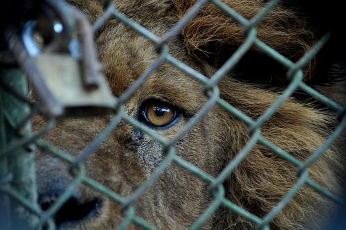 leon-zoo
