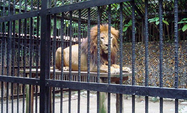 zoologicoscostarica