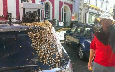 abejas-persiguen-auto-reina-3