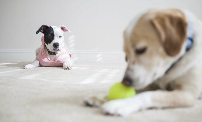 los-perros-sienten-celos-1