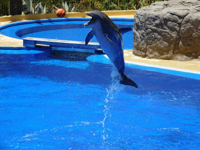 dolphins-1170343_1280-660x550