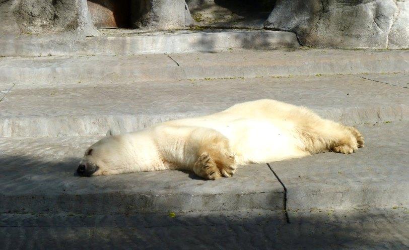 oso-polar-winner