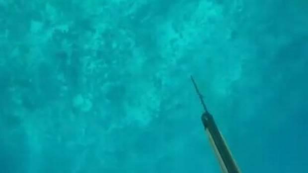 pesca tiburón