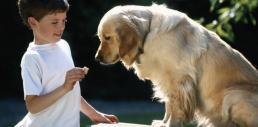 galletas-de-calabaza-para-nuestro-perro