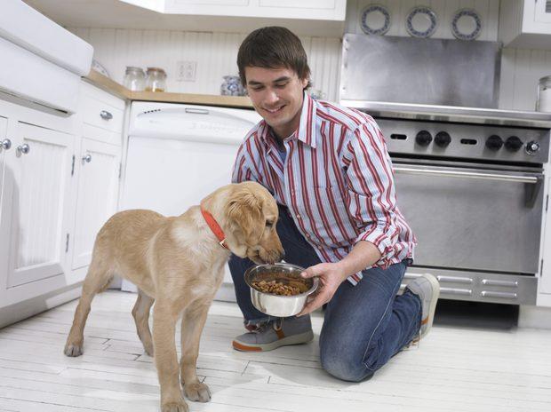 perro comida.jpg