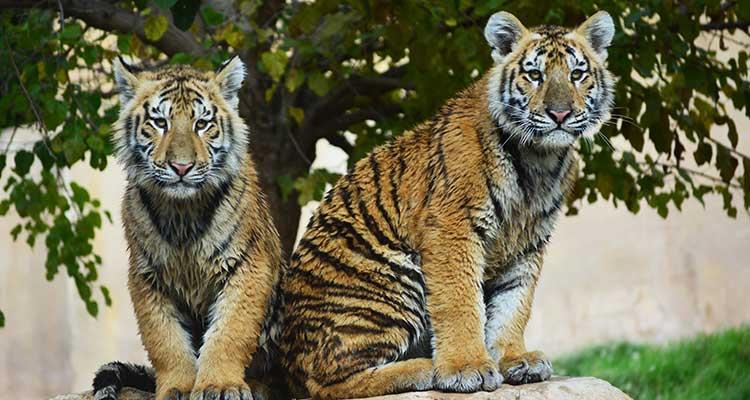 Terra-Natura-Zoo-Benidorm