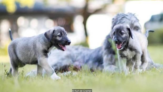 perros-gemelos
