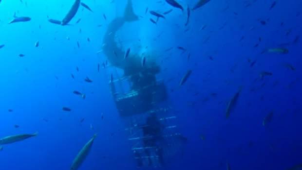 ataque-tiburon