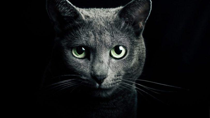 chats-vous-protegent-1024x576