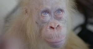 alba-oraguntana-albina.jpg.imgw.1280.1280
