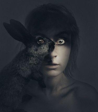 rabbit-in-your-headlights-5911dc406342d__880